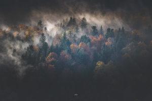 Forets Hautes Pyrénées stage et voyage photo ©terra photo