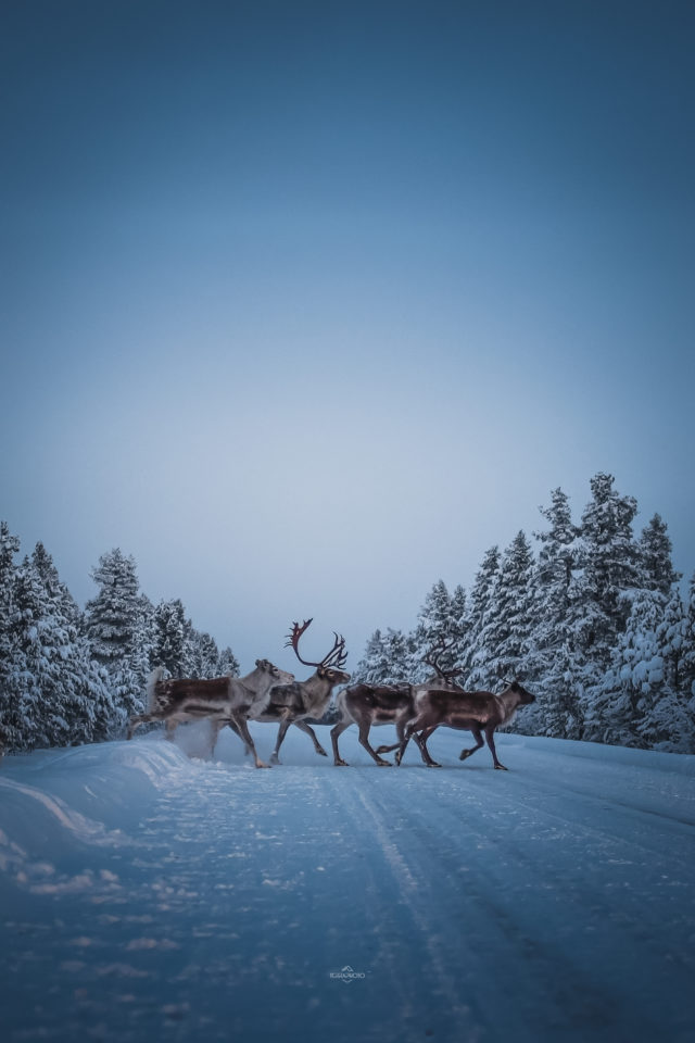 Laponie voyages photo ©terra photo