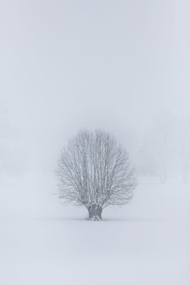 arbre dans la neige ©Terraphoto stages et voyages photo