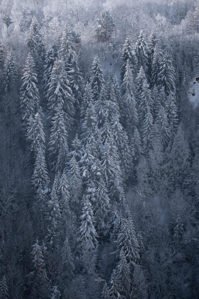 Forêt hiver Hautes Pyrénées voyage photo ©terra photo